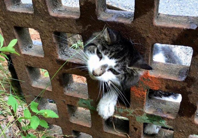 skliska crna maca