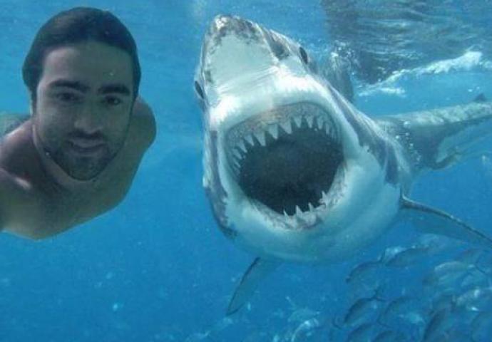 Картинка кличко с акулой
