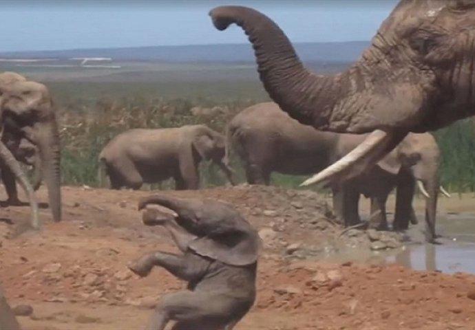 slonovi seks videa crna koža djevojka porno