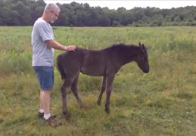 Prišao je malom konju s leđa, dobro obratite pažnju šta se