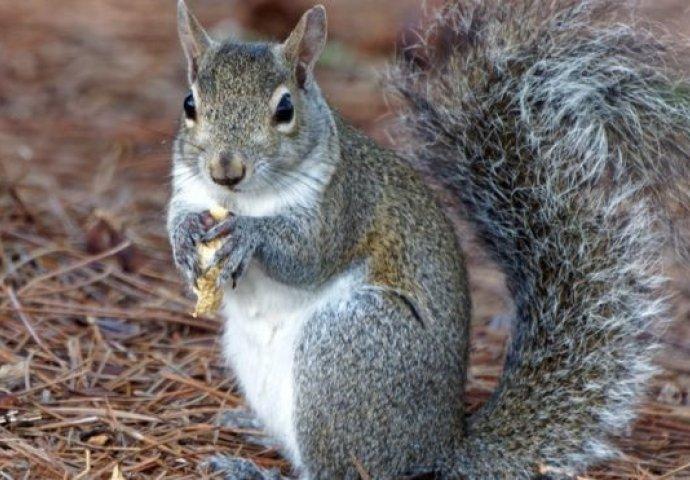 slike ženskih vjeverica crna pička pics.com
