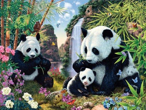 panda-test-1