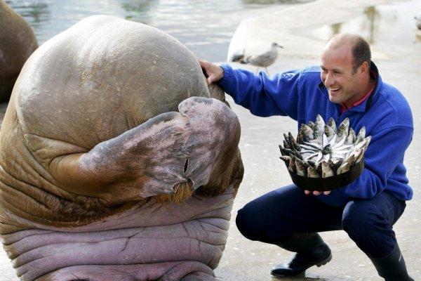 morz-se-postideo-kada-je-dobio-tortu-od-riba-za-svoj-rodendan-u-norveskoj-16