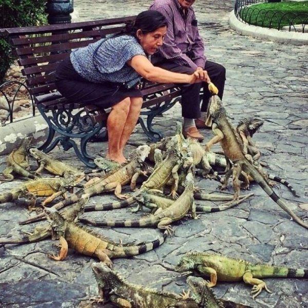 ovako-se-hrane-ptice-u-ekvadoru-8