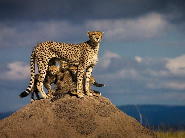 u-africkim-divljinama-19-c99