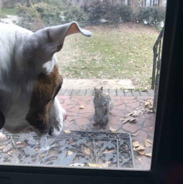 squirrel-glass-door-1068x1070