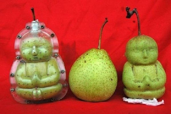 savrsene-kruske-za-vase-prijatelje-budiste-2