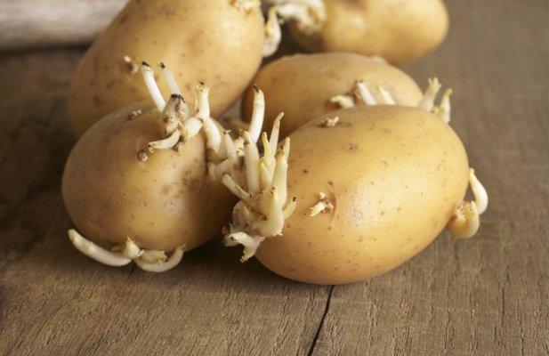 krompira-sa-klicom-zelena-kora