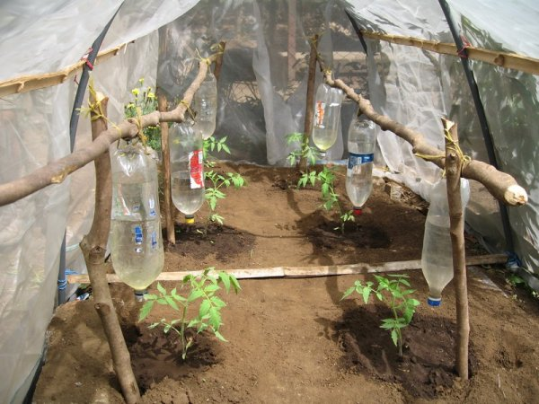 6327799-drip-irrigation-through-plastic-bottles-0-1