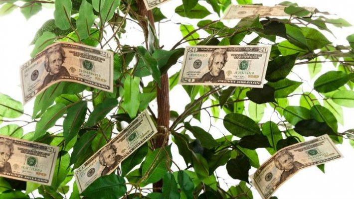 give-money-tree-gift-c4568a2d00b01d0a