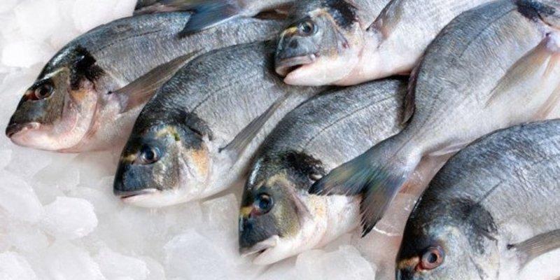 riba-hladnjak