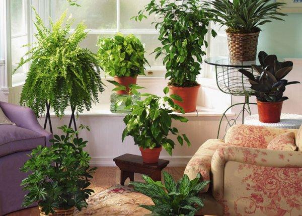 sobne-biljke-3