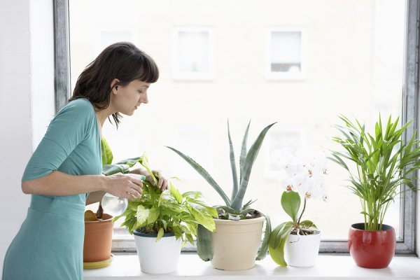 indoor-plant-care-tips