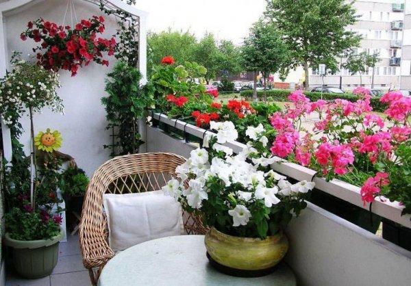 cvijece-balkon