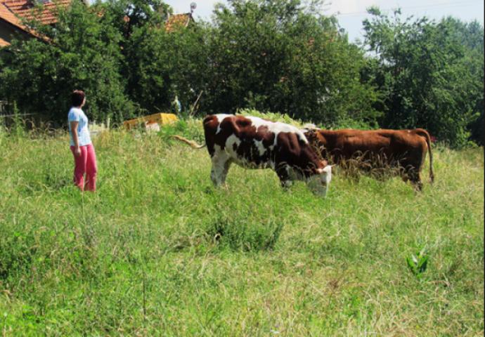Djevojka iz grada se udala na selo: Brzo je pobjegla glavom bez ...