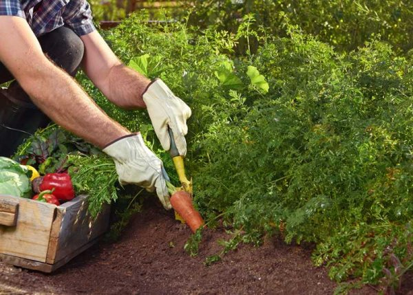 how-to-start-your-first-vegetable-garden-and-grow-your-own-vegetables