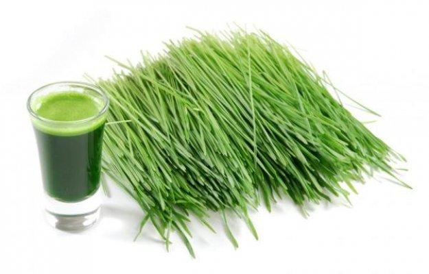 psenicna-trava-lekovita-svojstva-upotreba-i-recepti-e1450019849942