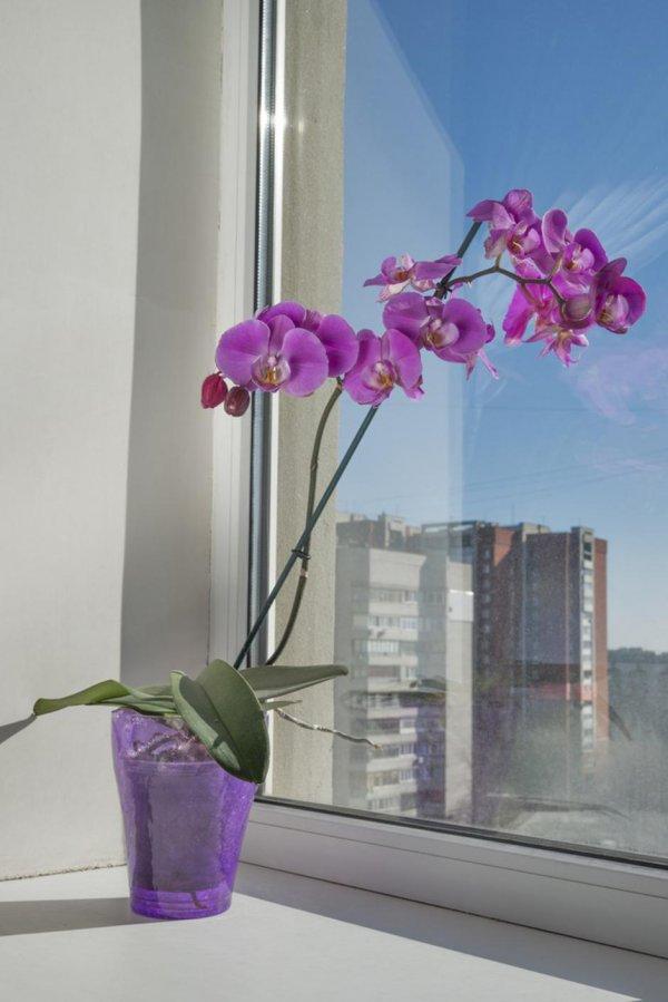 orhideja1