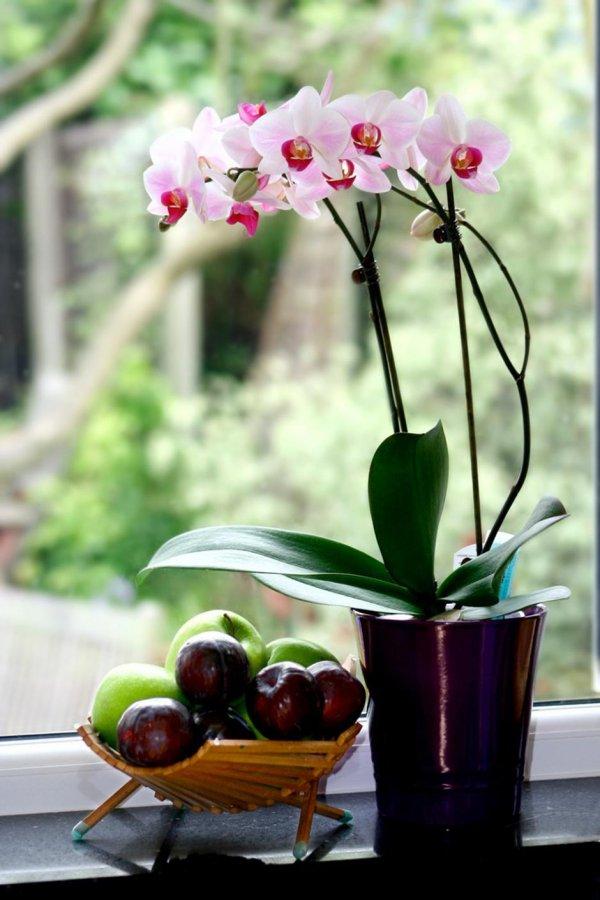 orhideja2