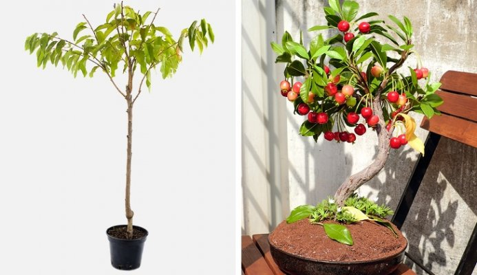 vhery-paradajz