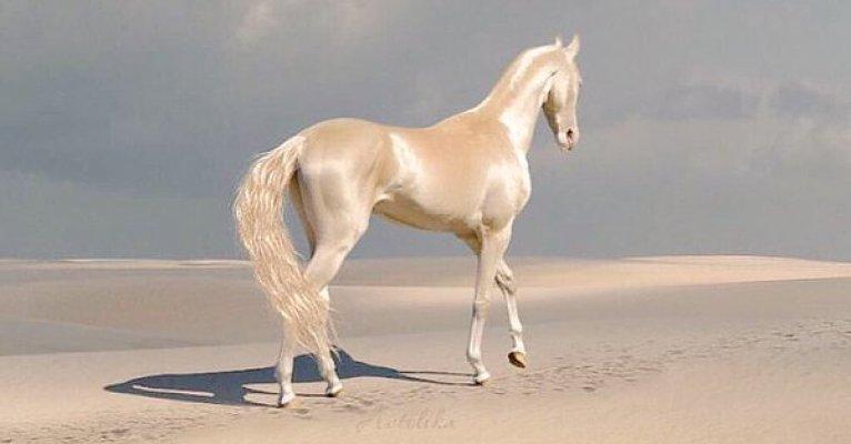 konj6