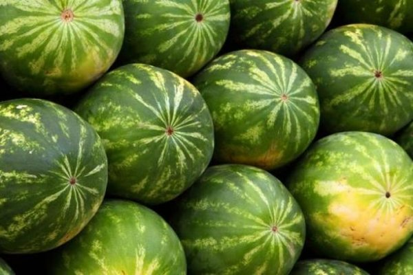 lubenica1
