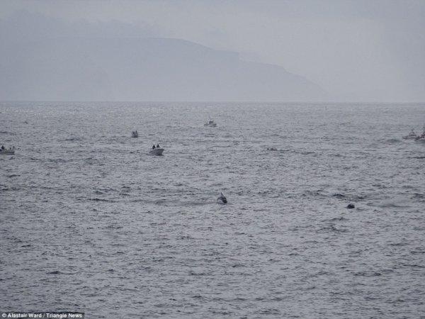 kitovi9