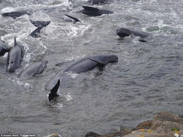 kitovi11