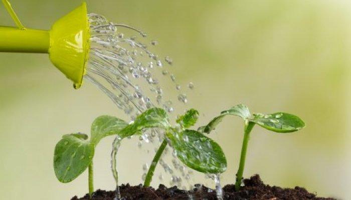 biljke2-525x300