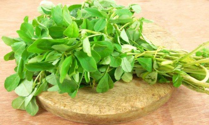 piskavica-list-biljka