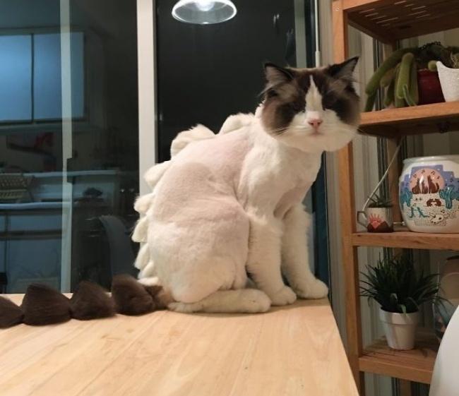 Profil za ljubav Volim mačke