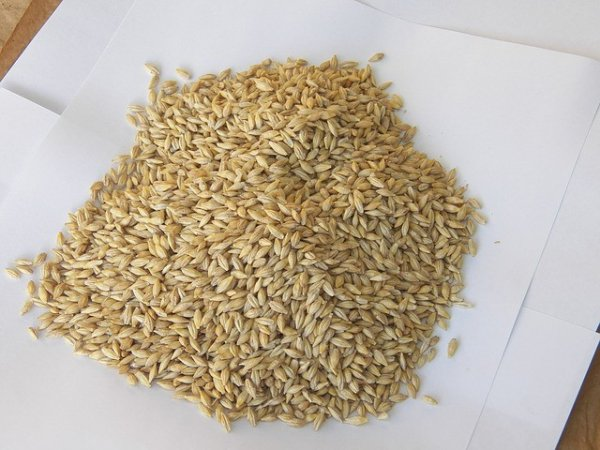 barley-seeds-524679-640-640x480