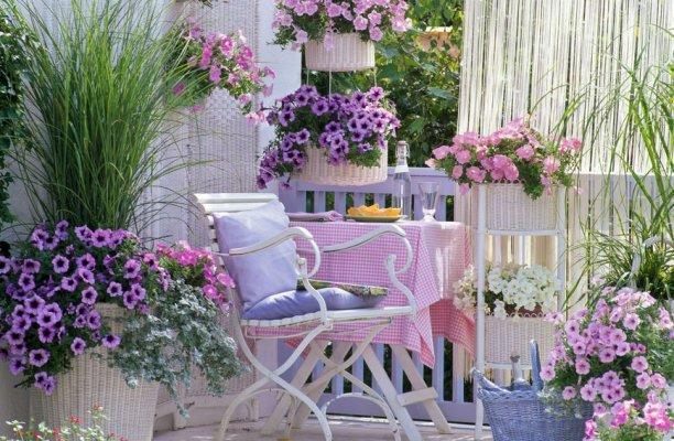 61877995-cvijece-petunije-balkon