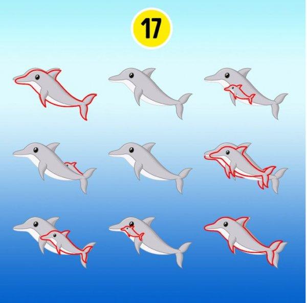 delfin17