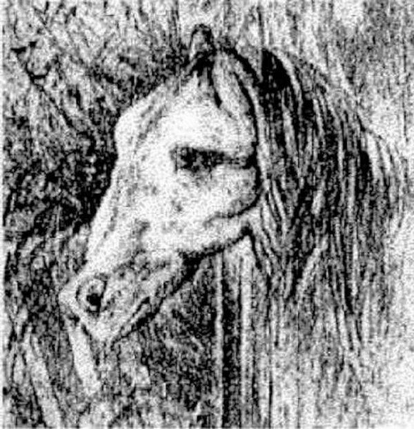 konj1