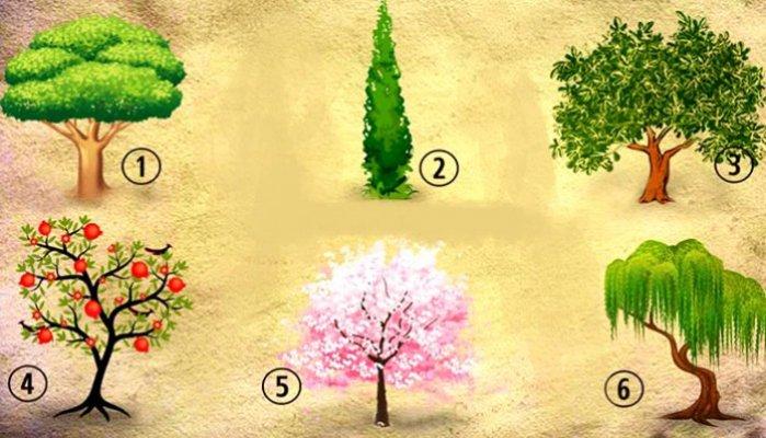test-licnosti-stabla