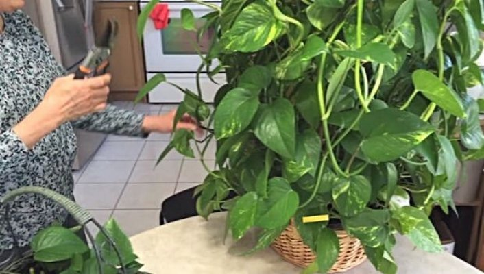 biljka