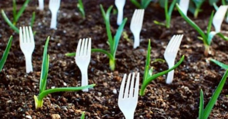 ako-zelite-da-zastitite-biljke-od-zivotinja-kao-sto-su-zecevi-zabodite-viljuske-u-zemlju-7-696x364
